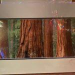 #136  John Gill Photography Redwoods  $35.00