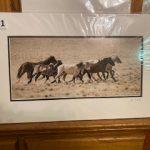 #141 John Gill Photograph Wild Horses $35.00